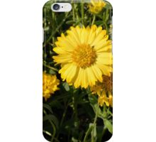 Yellow flowers in the grass. iPhone Case/Skin