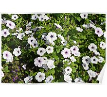 White spring flowers in the park. Poster