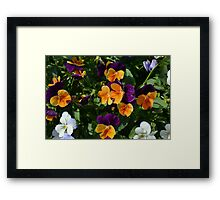 Colorful orange and purple flowers background. Framed Print