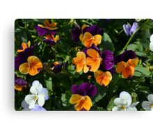 Colorful orange and purple flowers background. Canvas Print
