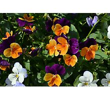 Colorful orange and purple flowers background. Photographic Print