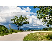 lonely tree on a country road Photographic Print