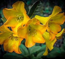 Yellow. by Bette Devine