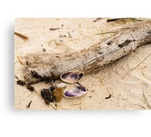 Beachcomber Canvas Print