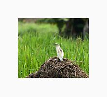 Squacco Heron in Rice Field Unisex T-Shirt