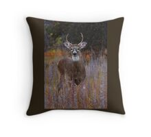 Prince - White-tailed Deer Throw Pillow