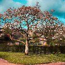 Spring Magnolia  by Simon Duckworth