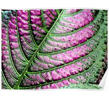 Iridescent Colorful Leaf Poster