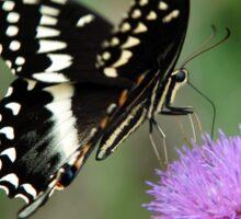 Palamedes Swallowtail Sticker