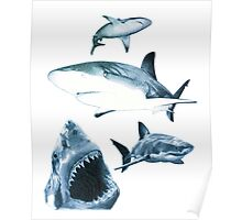Sharks and sharks Poster