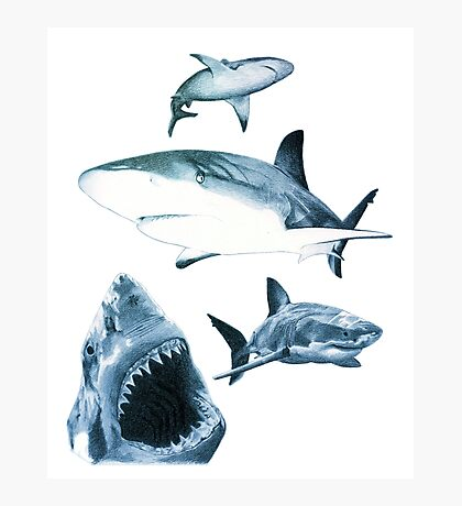 Sharks and sharks Photographic Print