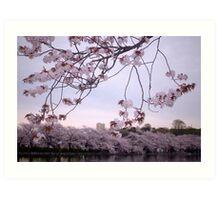 Sakura Season Art Print