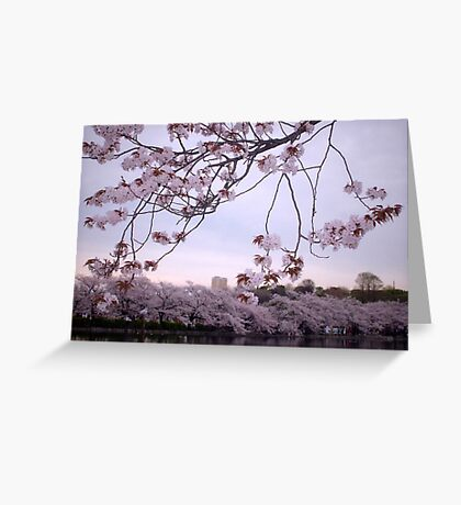 Sakura Season Greeting Card