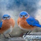 Don't Ruffle My Feathers! by Bonnie T.  Barry