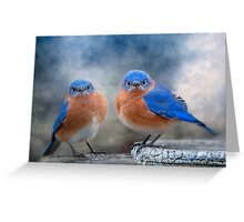 Don't Ruffle My Feathers! Greeting Card