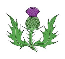 Thistle by Richard Fay