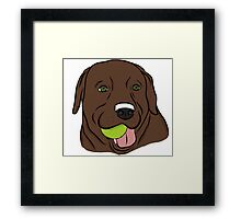 Chocolate Lab with Ball  Framed Print