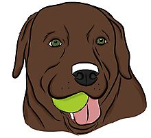 Chocolate Lab with Ball  Photographic Print