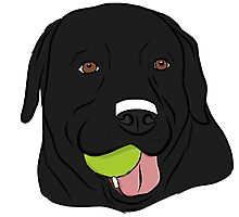 Black Lab with Ball  Photographic Print