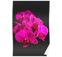 Photo art pink orchid Poster