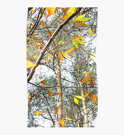 Highlights of Autumn Poster