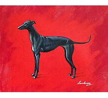 Black Greyhound Photographic Print