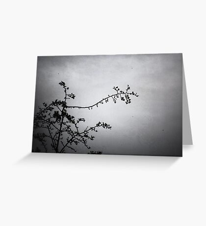 A tracery of branches Greeting Card