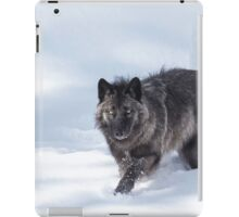 Black Wolf iPad Case/Skin