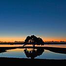 Sue's Tree - Redland City Qld Australia by Beth  Wode