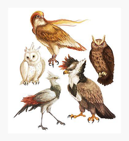 PokéBirds of Prey I Photographic Print