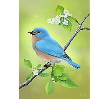 The Blue Bird Photographic Print