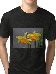 Two Daffodils Against Gray Tri-blend T-Shirt