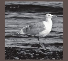 BW Side View Seagull Baby Tee