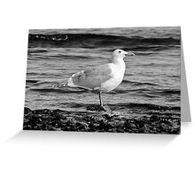 BW Side View Seagull Greeting Card