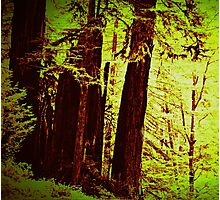 Magical Redwoods In Abstract  Photographic Print