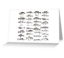 Fish Collection Greeting Card