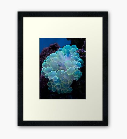 Bubble coral Framed Print