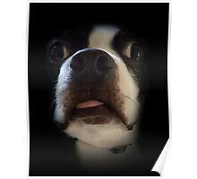 Bosco's Dumb Face Poster