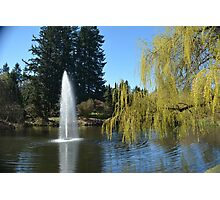 Beautiful spring garden with willow tree by a pond and water fountain Photographic Print