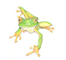 Little Green Frog Photographic Print