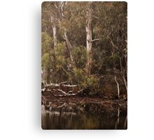Eucalyptus trees, Standing Strong By Lorraine McCarthy Canvas Print