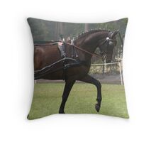 Harness horse bay light Throw Pillow