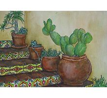 Prickly pears in pot Photographic Print