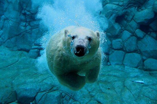 Polar Bear Dive by Mark Snelson