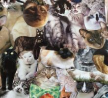cats cats cats Sticker