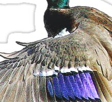 Mallard duck in flight Sticker