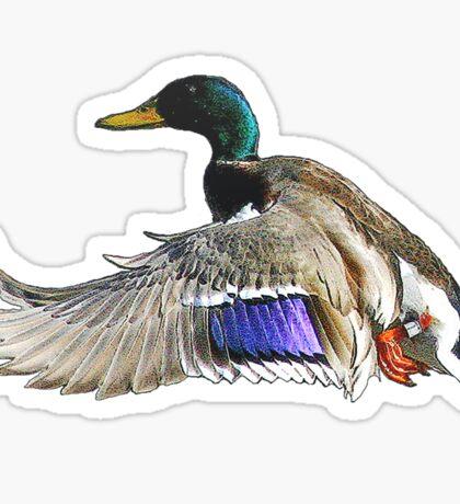 Mallard duck in flight Sticker