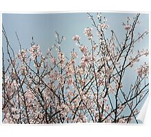 First Blossom Poster