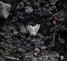 Grey moth by merrywrath