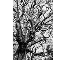 Gnarly Tree Photographic Print